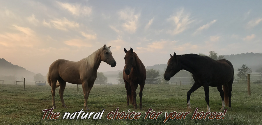Triple L Ranch - Horse Boarding, Horse Back Riding Trails in