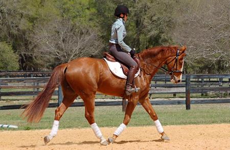 Horse training in TN